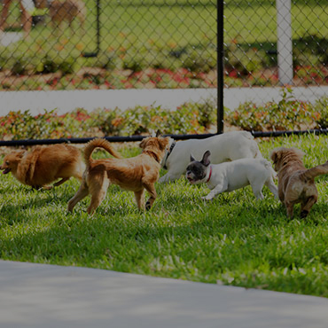 Large Dog Park at Commons On 2nd Apartments